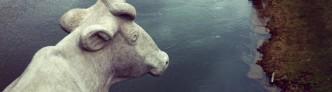 Giebichensteinbruecke Kuh