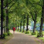 Jogger läuft Allee entlang