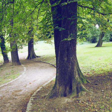 Weg zwischen Bäumen im Reichardts Garten