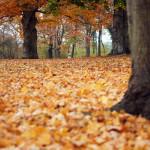 Herbstblätter im Heinrich-Heine-Park